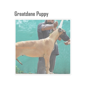 Kci Registered Dog Breeders List In India Puppies For Sale