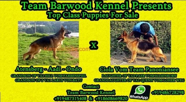 Team Barwood Kennel