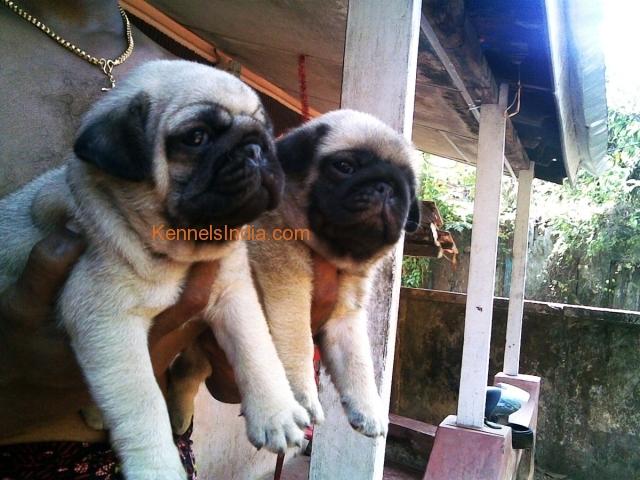 Kerala Dog Kennels