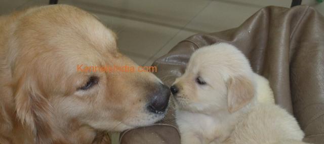 Chuku and his Puppy