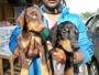 kci(microchip) female dob puppies