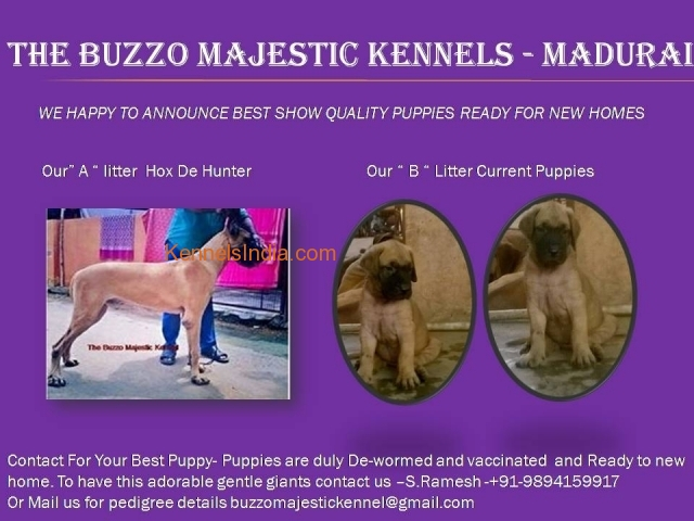 Show quality Great puppies for Sales in Madurai