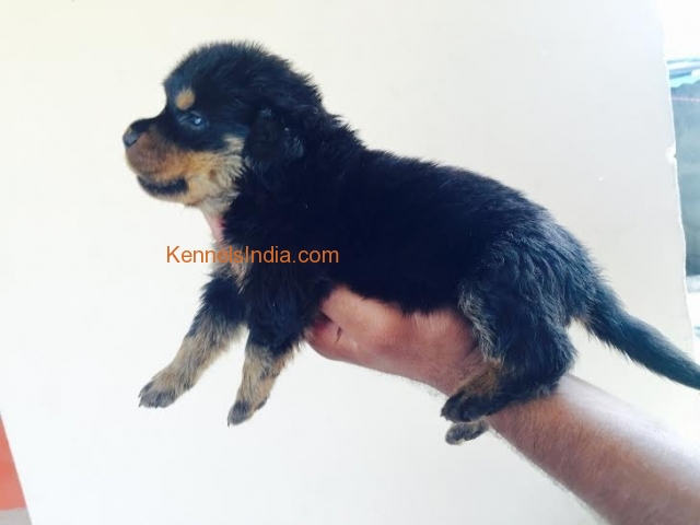 Coimbatore olx dogs for sale