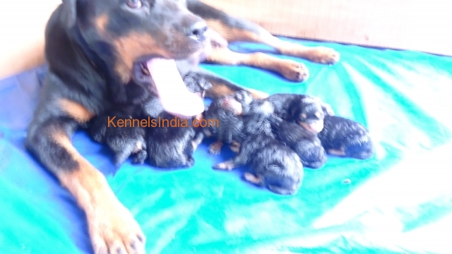 MOTHER AND PUPPIES
