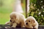 Male and female puppy