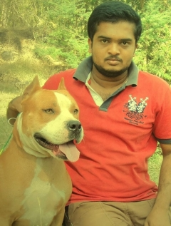 AMERICAL BULLY FOR STUD IN COIMBATORE